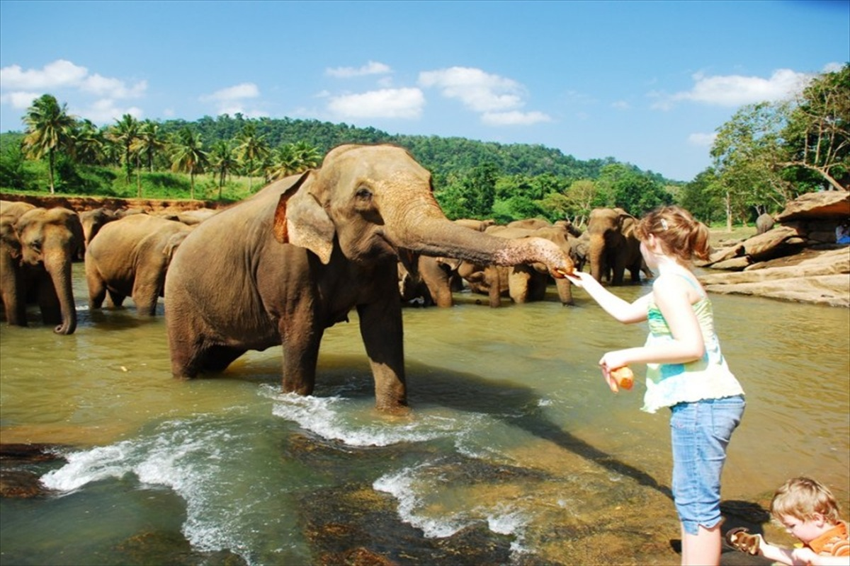 elephant-orphanage-feeding-sri-lanka